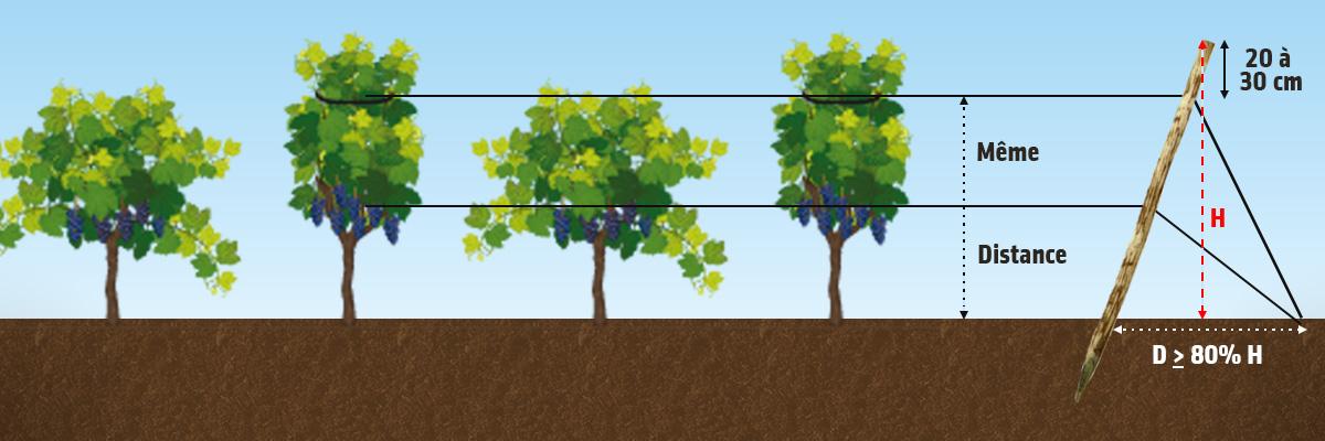 comment planter 1 pied de vigne