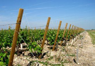 palissage de vignes bois piquet